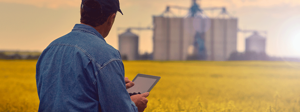 Farmer working on a tablet in the field