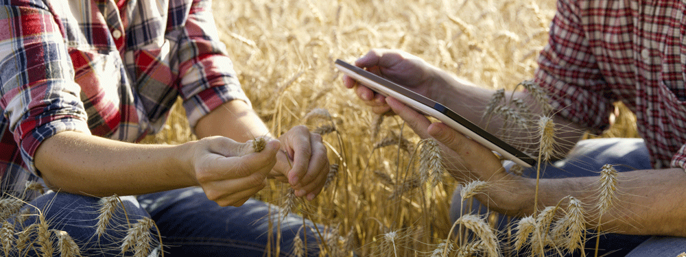 Two farmers working in a field with a tablet