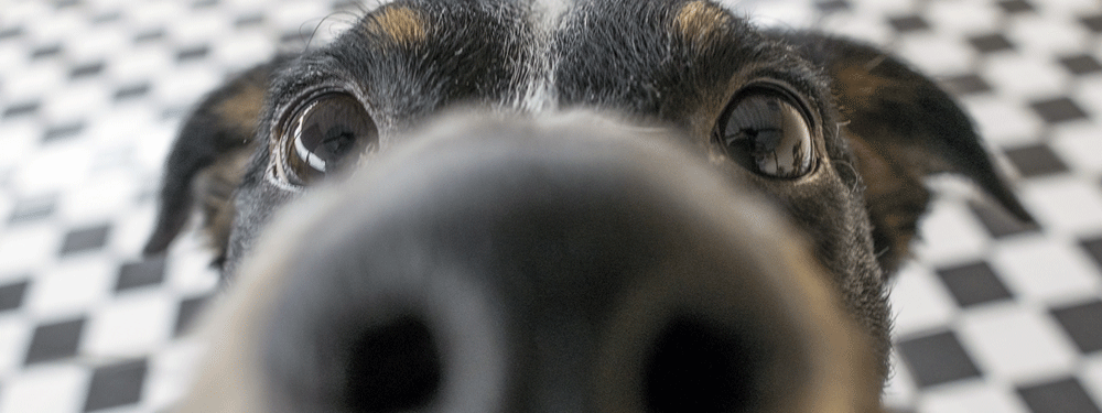 Dog begging for treats up close