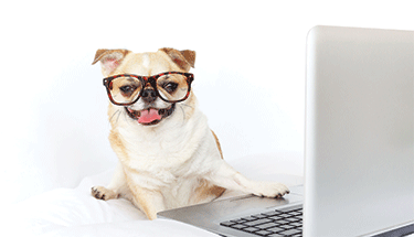 Dog wearing glasses at a laptop featured