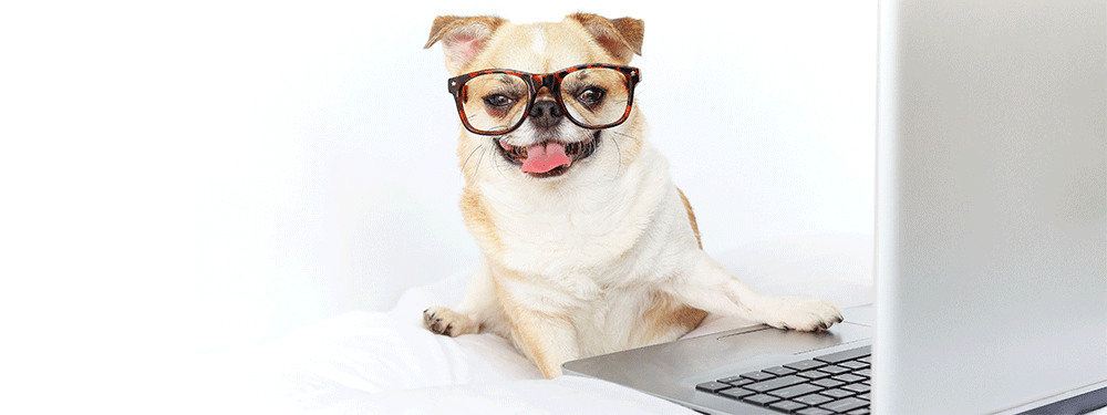 Dog Wearing Glasses Computer Nerd