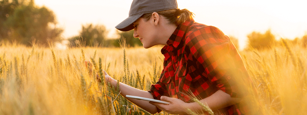 woman working on crops
